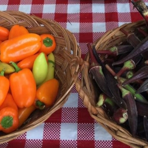 Baskets of produce from the Red Barn Garden