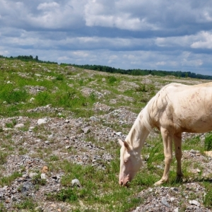 Photo of free roaming horse